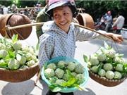 Lạng Sơn đẩy mạnh quảng bá na Chi Lăng
