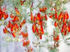 """""""Tận mục"""" vẻ đẹp của loài hoa hiếm bậc nhất thế giới"""