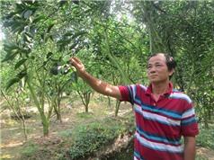 3.500m2 đất trồng cam sành, ước thu 750 triệu đồng