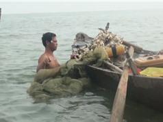 Clip: Kéo lưới bắt cá bống ở hồ Trị An, kiếm tiền triệu mỗi ngày
