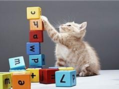 Khả năng đếm và làm toán của các loài động vật