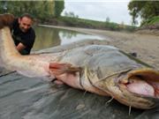 Clip: Câu được cá trê nặng hơn 100kg trong đêm