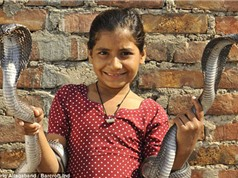 Clip bé gái chơi cùng 6 con rắn hổ mang