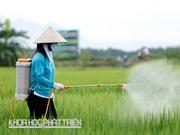 Biến 130 triệu nông hộ thành 30.000 tổ, đội dịch vụ phun thuốc