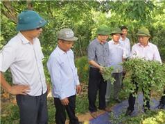 Kỳ vọng cây dược liệu, hồ tiêu ở Quảng Bình