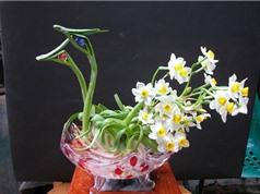 Kỹ thuật trồng và chăm sóc hoa thủy tiên dễ như trở bàn tay