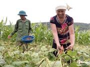 Thu 4 tỷ đồng nhờ trồng đậu trên đất lúa cao cưỡng
