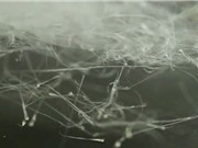 Máy làm kẹo bông tạo vật liệu chữa lành vết thương