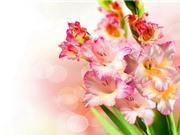 Kỹ thuật trồng và chăm sóc hoa lay ơn cho hoa nở quanh năm