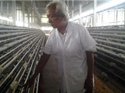 Lão nông xuất khẩu 200.000 trứng tí hon, lãi 12 triệu đồng mỗi ngày