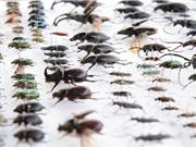 Hậu quả khi côn trùng biến mất khỏi Trái Đất