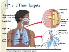 Không khí bẩn có thể gây bệnh tim mạch