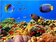 Cá thành tí hon khi nhiệt độ nước biển tăng