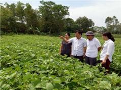 Thanh Hóa tìm cây trồng nông nghiệp phù hợp với vùng đất ven biển
