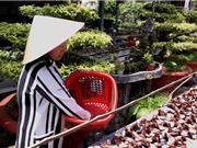 Trồng nấm linh chi và nấm bào ngư, hướng mới của nông dân An Giang