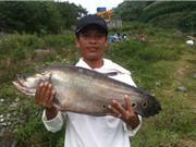 Bắt được cá thác lác nặng hơn 7kg ở Quảng Nam