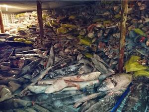 Kinh hoàng cảnh hàng nghìn xác cá mập chất đống trên tàu Trung Quốc