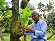 Lão nông U80 tuổi và bí quyết trồng sầu riêng thu 4 - 5 triệu/cây