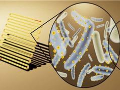 Phát hiện loài vi khuẩn có thể tạo nguồn năng lượng mới cho thế giới