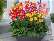 Vẻ đẹp của loài hoa đứng thứ 5 thế giới về giá trị thương mại