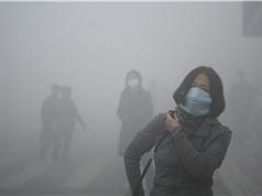 Những tác nhân gây bệnh đường hô hấp trong bụi