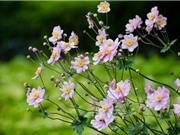 Chùm ảnh vẻ đẹp của hoa xuân Nhật