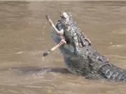 Clip: Cảnh cá sấu xâu xé ngựa vằn con