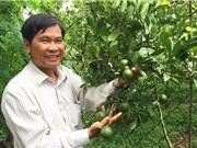 Bí quyết trồng quýt đường GlobalGAP kiếm tiền tỷ mỗi năm