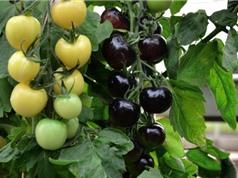 Bảo hộ giống cây trồng giúp phát triển giống mới