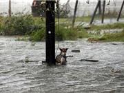 Chó ngồi chờ chết vì bị chủ bỏ rơi khi chạy bão