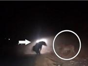 Clip: Gấu đen ác chiến với hổ trong đêm tối