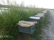 Kiếm trăm triệu đồng từ nghề khai thác mật ong của biển