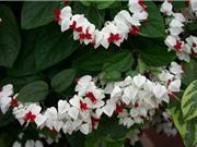 Vẻ đẹp của loài hoa tượng trưng cho hình ảnh người con gái