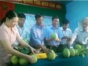 """Công bố nhãn hiệu tập thể """"Thanh trà Huế"""" - Hương Vân"""