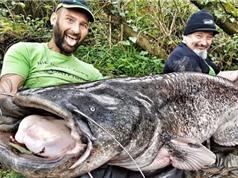 Clip: Câu được cá nheo khổng lồ trong dòng nước lũ