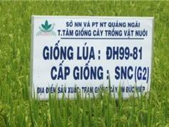Đăng ký bảo hộ giống cây trồng mới, chủ sở hữu có nhiều quyền