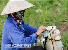 Tổ đội dịch vụ giúp giảm sử dụng thuốc bảo vệ thực vật