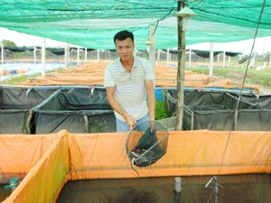Chàng kỹ sư công nghệ thông tin thành công với nghề… nuôi lươn