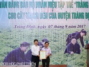 Cây thạch đen Tràng Định, Lạng Sơn nhận nhãn hiệu tập thể