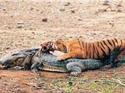 CLIP HOT NGÀY 7/9: Hổ hạ sát cá sấu, bé trai thoát chết khó tin dưới gầm xe tải