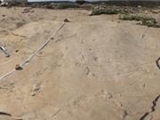 Dấu chân 6 triệu năm tuổi ở Hy Lạp có thể thay đổi thuyết tiến hóa loài người