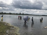 Gia Lai: Thả trên 35.000 con cá giống ra hồ tự nhiên