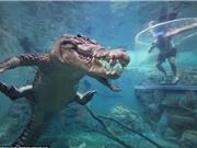 Rợn người cảnh tiếp xúc với cá sấu qua lồng tử thần