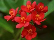 """Hồng mai - loài hoa mang vẻ đẹp """"độc-lạ"""""""