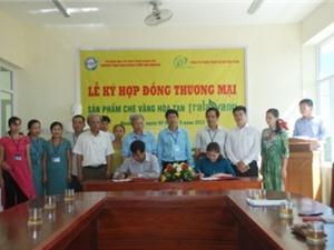 Quảng Trị: Ký hợp đồng thương mại sản phẩm chè vằng hoà tan Tralavang