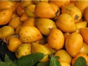 Trồng cây trứng gà cho quả sai quanh năm