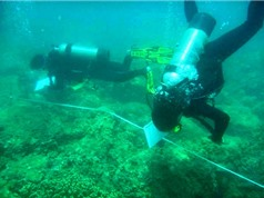 Gần 3.000 tập đoàn san hô cứng ở Cù Lao Chàm được phục hồi nhờ ứng dụng công nghệ