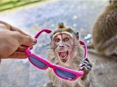 Clip: Khỉ tinh ranh, bắt người đưa quà bánh để chuộc tài sản