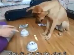 Clip: Chó trổ tài chơi trò đoán vật siêu dễ thương