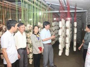 Hà Tĩnh: Ứng dụng tiến bộ KH&CN sản xuất nấm